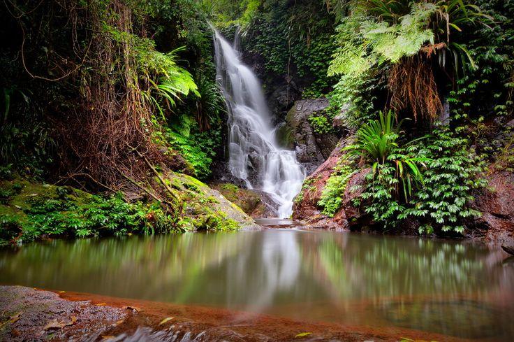 AUSTRALIA: Lasy Deszczowe Gondwana, Australia - 510 tys. odwiedzających rocznie
