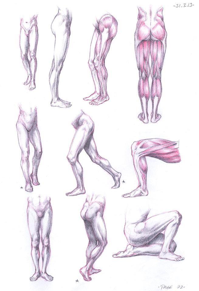Anatomy Studies join us http://pinterest.com/koztar