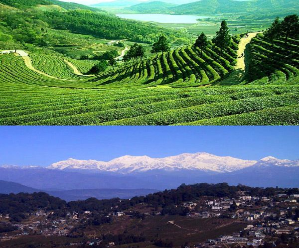 A Tea Tour with Renshaw Travel - North East India