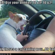 a6dc31433045b6a90d828bd9add9d77b best memes funniest memes 66 best jack russell memes images on pinterest jack russells