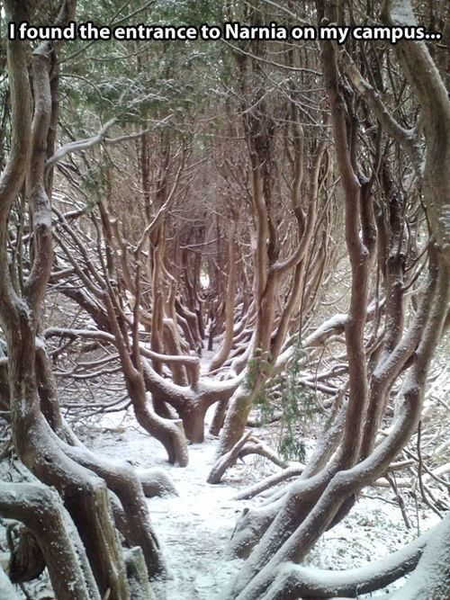 Beautiful, but clearly an entrance to Narnia