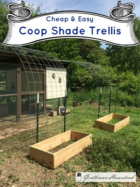 Cheap & Easy Chicken Coop Shade Trellis. I'm growing grapes up this trellis to shade the chickens from the summer heat.