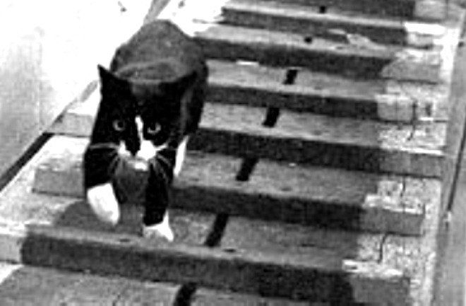 The Unsinkable Sam, the most famous mascot of the British Royal Navy, was in turn the ship's cat of the Bismarck, HMS Cossack, and HMS Ark Royal and survived the torpedoeing of all three ships before being retired to a home on dry land.