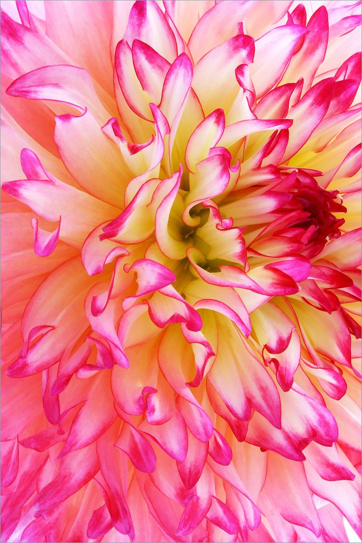 Romance must be like this. . . exciting, passionate, richly textured, colorful and bright ~ Kai