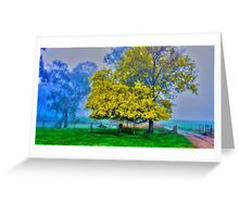 Golden Acacia Wattle Tree in Full Bloom Greeting Card