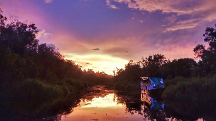 One of the Highlights visiting Tanjung Puting National Park is river cruising in The Sekonyer River while spotting Proboscis Monkeys and other wildlife in the late afternoon from the Klotok (Long-Wooden Boat).