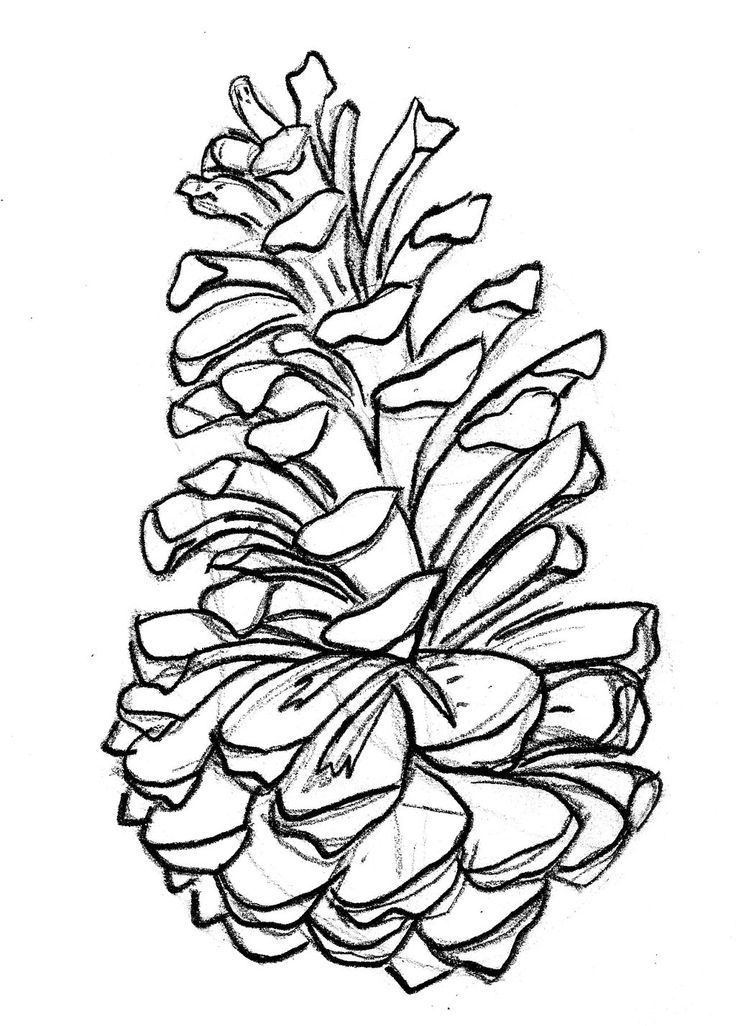 pine tattoo on Pinterest | Pine Cones, Pine and Branches