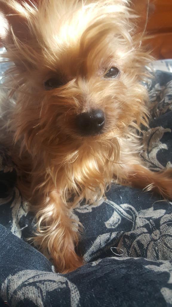Lost Dog Female Wichita Ks Usa 67205 Dogs Losing A Dog