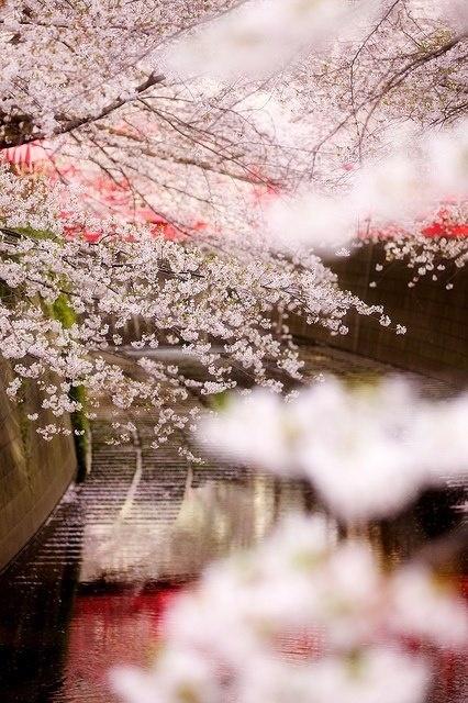 Spring. Japan