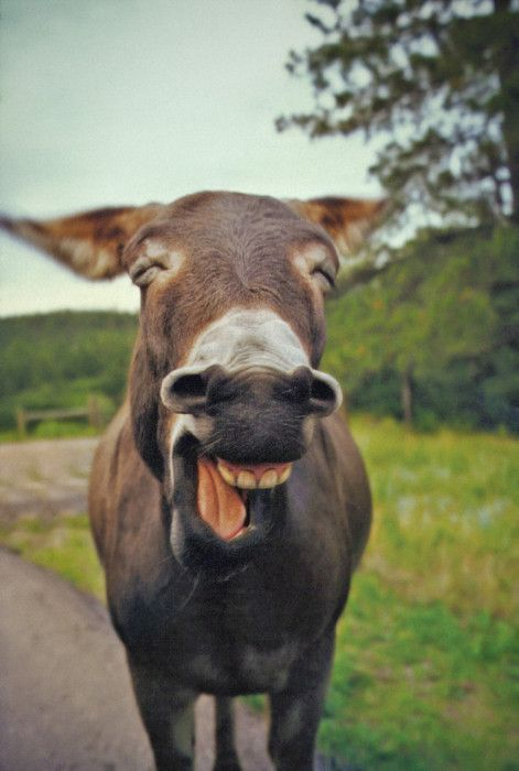 You, funny donkey...