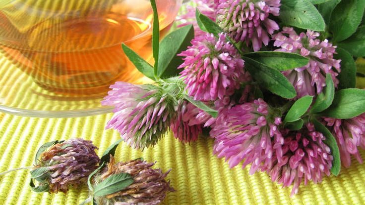 These simple herbal remedies have your back - here are 30 herbs that fight your worst cold and flu symptoms.