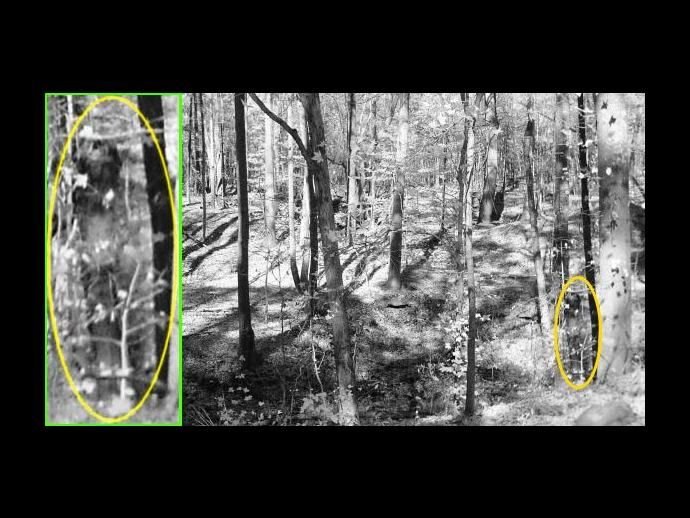 Is this a full spectrum apparition photographed in woods?
