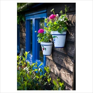 GAP Photos - Garden  Plant Picture Library - Wooden shed with blue painted windows, hanging ceramic painted pots with Pelargoniums - GAP Photos - Specialising in horticultural photography