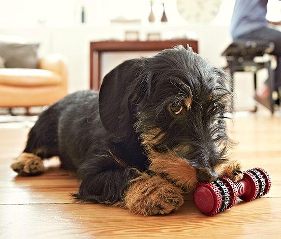 Pflegt spielend das Gebiss - #Hunde-Zahnpflege-Spielzeug mit #Minzgeschmack für €6,95 bei #Tchibo