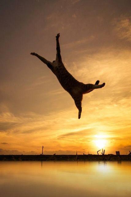 OMIGOSH a flying chaton!  ;D >^..^<