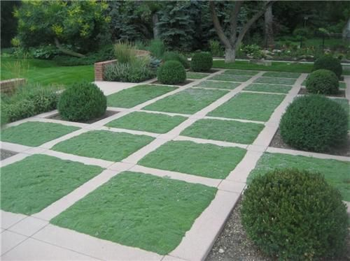 This courtyard was divided into a grid and planted with Elfin Thyme which is drought tolerant, semi-evergreen, has purple blooms and holds up well under foot traffic. Large round boxwoods anchor the space. Via www.landscapingnetwork.com.