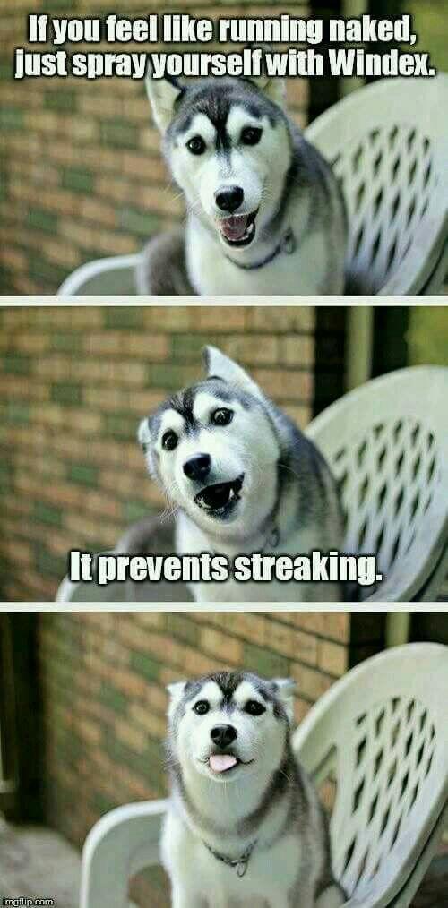 Streaking dog