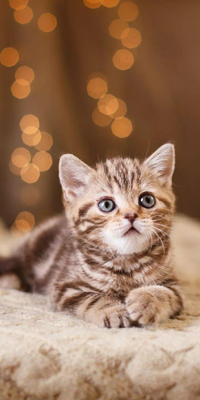 Cute Persian Cat 3d Wallpapers Wallpapersak Kitten Wallpaper Cute Baby Cats Cat Wallpaper