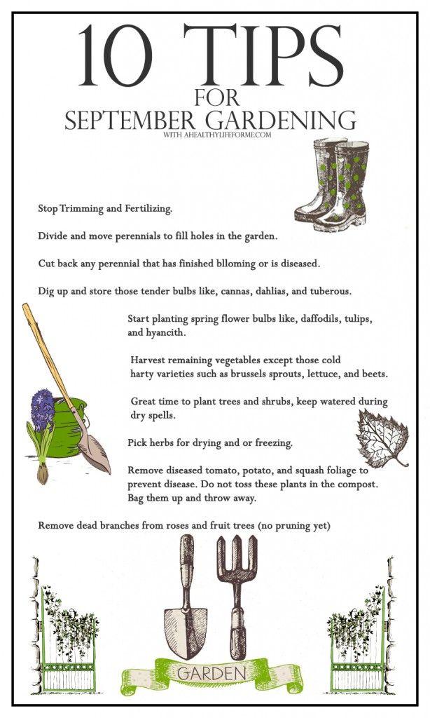 10 Tips for September Gardening - A Healthy Life For Me #Gardening #ToDoList