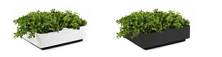 KROK 1: Wybór  Moduły KAROO dostępne są w 2 kolorach: białym i grafitowym. W jednym module znajduje się 9 kieszonek na rośliny. Wybierz dowolną ilość modułów i stwórz swoją własną kompozycję.