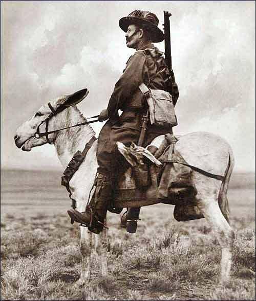 WW1 - Triple Entente - Cavalry & Horse-drawn: Australian light cavalry, Palestine.