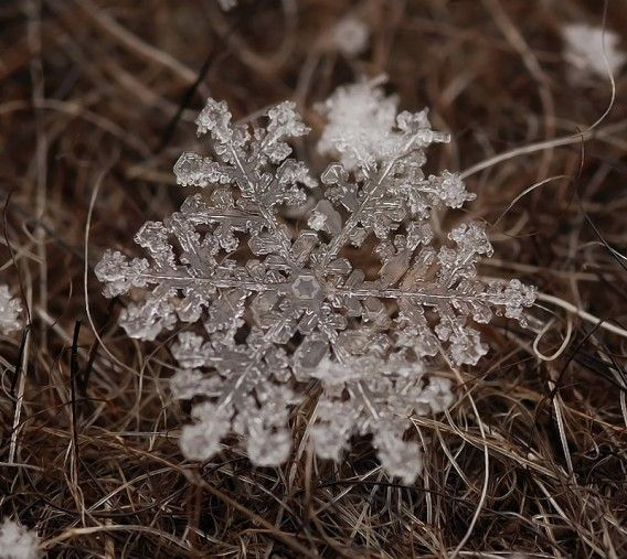 """Fragile and fleeting little gem. Closeup image of the """"snowflake"""", works of art by nature produce"""