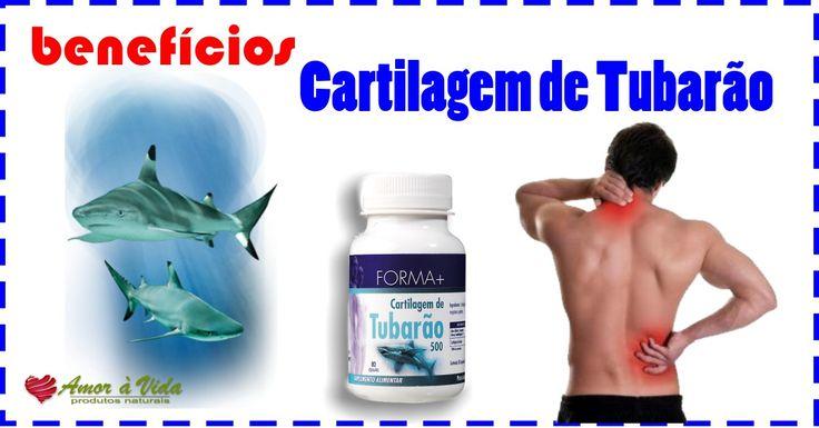 Benefícios da cartilagem de tubarão na sua saúde - http://amoravida.pt/beneficios-da-cartilagem-tubarao-na-saude/ Os benefícios da cartilagem de tubarão Acartilagem de tubarãopossui muitos nutrientes para a saúde dos humanos. A cartilagem de tubarão é utilizada na prevenção e combate de várias doenças, por ser formada de proteínas e minerais, como o fósforo e o cálcio. Entre osbenefíciosda cartilagem, en...