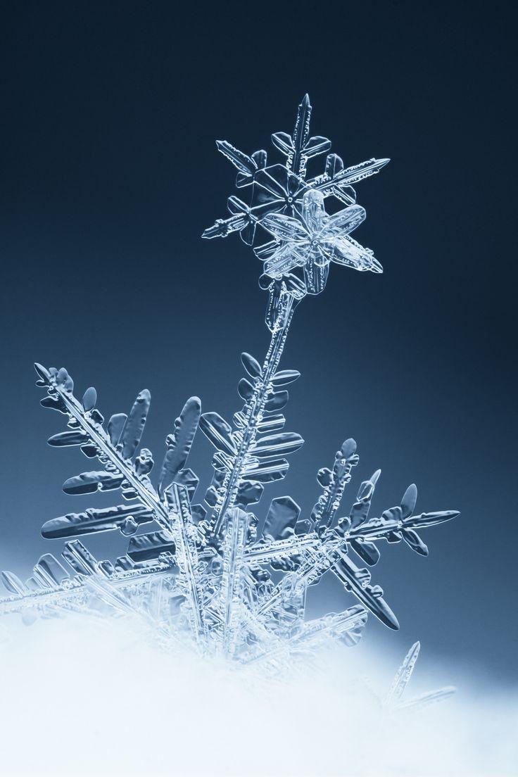 "renamonkalou: ""Snow Flower | Svatoslav Vrabec """