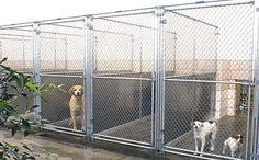 Mason Company Canine Outdoor and Indoor Kennel Runs