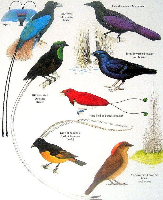 1980s in birding and ornithology