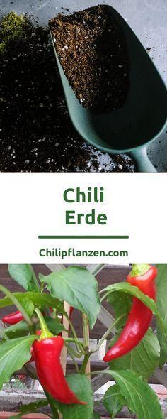 Chili-Pflanzen Erde Grundlage einer großartigen Chili Zucht ist eine geeignete Erde. Das richtige Substrat sollte eine lockere und gleichzeitig stabile Struktur haben. Falls diese antrocknet, darf sie weder verdichten noch verklumpen. Für eine reiche Ernte von schönen Chilis lohnt es sich früh mit dieser Materie zu beschäftigen. Schließlich soll viel Freude am scharfen Gemüse aufkeimen.