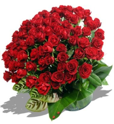 http://www.eyejot.com/users/rinasana0  Send Flowers,  Flowerwyz,Flower Wyz,Flowerwyz Flower Delivery,Flower Delivery,Flowers Online,Send Flowers,Flowers Delivery,Cheap Flowers,Cheap Flower Delivery,Online Flowers,Sending Flowers  It is considerably essential to spend time while searching the flowers to purchase for some special occasion.