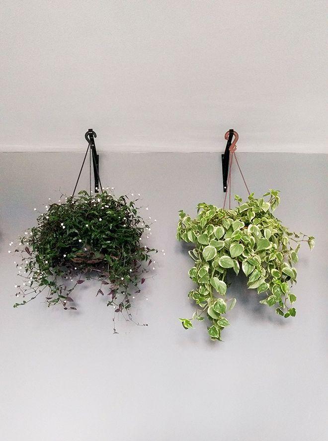 25 melhores ideias de plantas de sombra no pinterest for Plantas para dentro de casa sombra