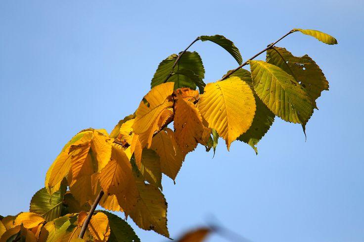 First signs of autumn by Rausch Wilhelm Robert on 500px