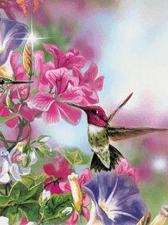 Beautiful Animated Gif Birds