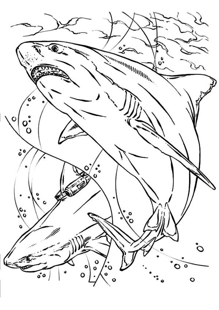Bull Shark Coloring Pages Shark Coloring Pages Animal Coloring Pages Coloring Pages