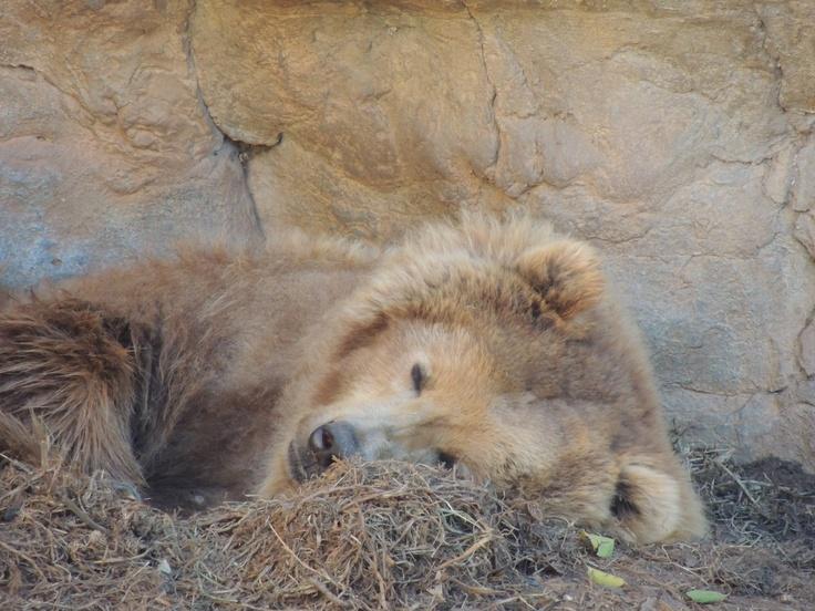 Bear... It looks like it needs a little TLC!!!