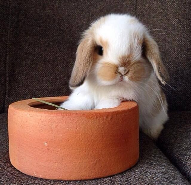 Baby Bunny...just precious.  The face...awww pinned by How I See It <via Tracy Chou>