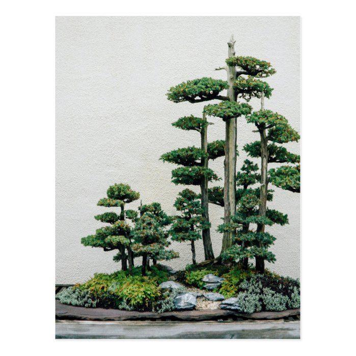 Juniper bonsai forest postcard in 2021