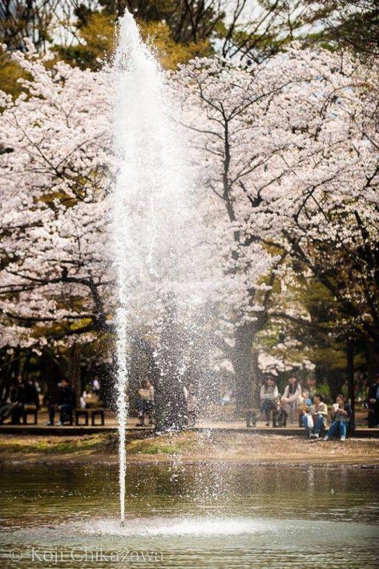 Tokyo Yoyogi Park