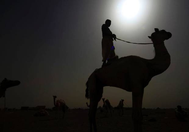 A man stands on a camel during preparations ahead of a race using robot jockeys in Kassala state, east Sudan. Sudan started using robots as jockeys in 2009, after the human rights issues of using boys as child labour was raised in the Gulf countries.  (MOHAMED NURELDIN ABDALLAH/REUTERS)