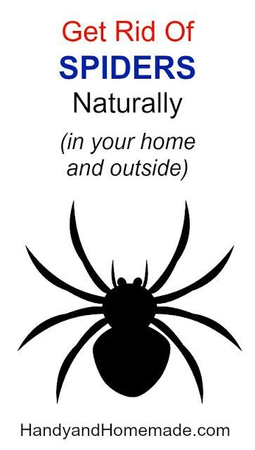 How To Get Rid Of Outdoor Spiders Naturally