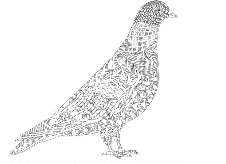 17 best images about coloriage on pinterest dovers gel pens and pencil drawings - Dessin pigeon ...