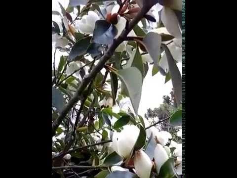 In a spring garden - YouTube