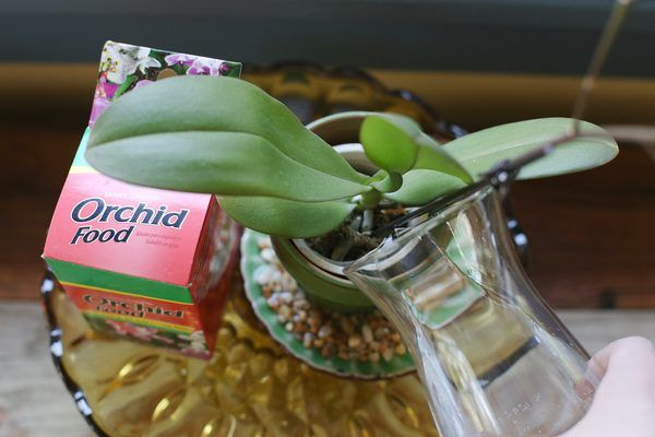 how to make a stem on an orchid