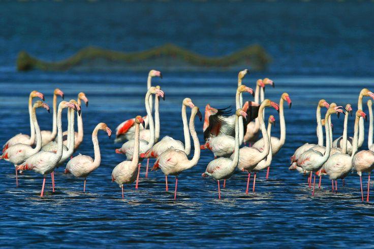 Flamencs al Parc Natural del Delta de l'Ebre. Copyright Patronat de Turisme de la Diputació de Tarragona #Sternalia