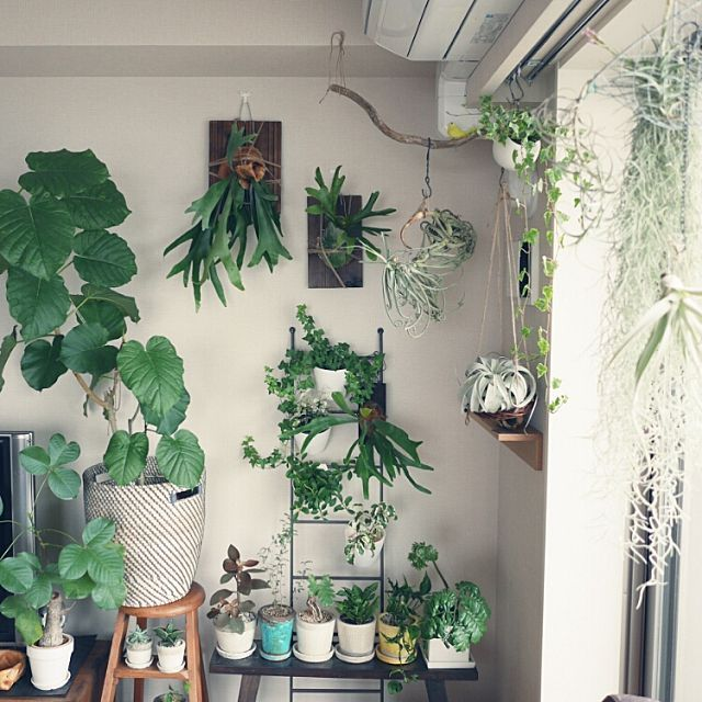 GREENERY Hang Pot Wall All Different Ways To Display