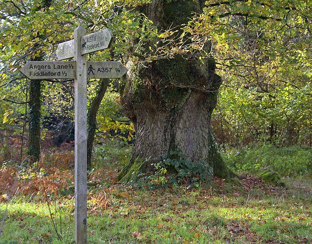 Piddles Wood #walk #nature #wood #forest #green #sign #Dorset #piddles #wildlife