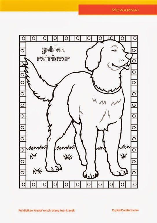 lembar kerajinan anak paud (balita/TK/SD), mewarnai anjing golden retriever