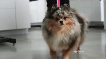 PetSmart Grooming TV Spot, 'Baby, They're Worth It' Song by Fifth Harmony